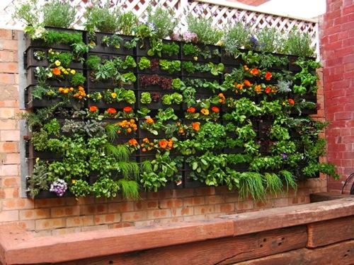 wall hydroponics